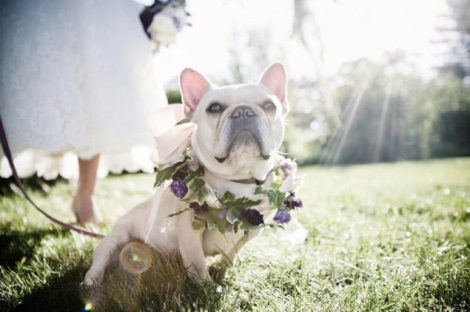 DogsInWeddings-1