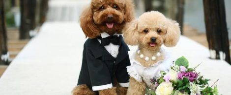 dogs_wedding