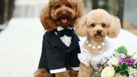 5 Interesting Ideas for Including dog on your Wedding day!