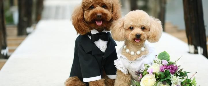 Including Dog On Your Wedding Day