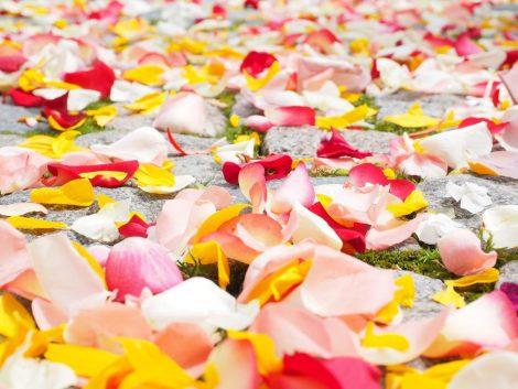 rose-petals-petals-wedding-red